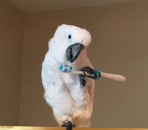 Diesel - Brush your beak!